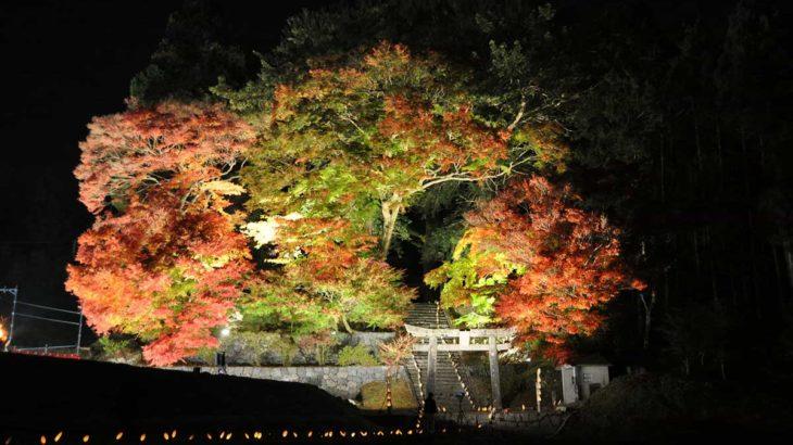 11/16(土)・17(日)は「大山衹神社の古木の紅葉とライトアップ」へ!