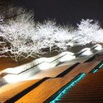 3/26(金)~28(日)は[あまぎ水の文化村]の桜のライトアップを観よう