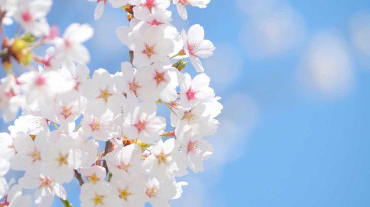 鳥栖・三養基・神埼・小郡・朝倉エリアの桜の名所41選